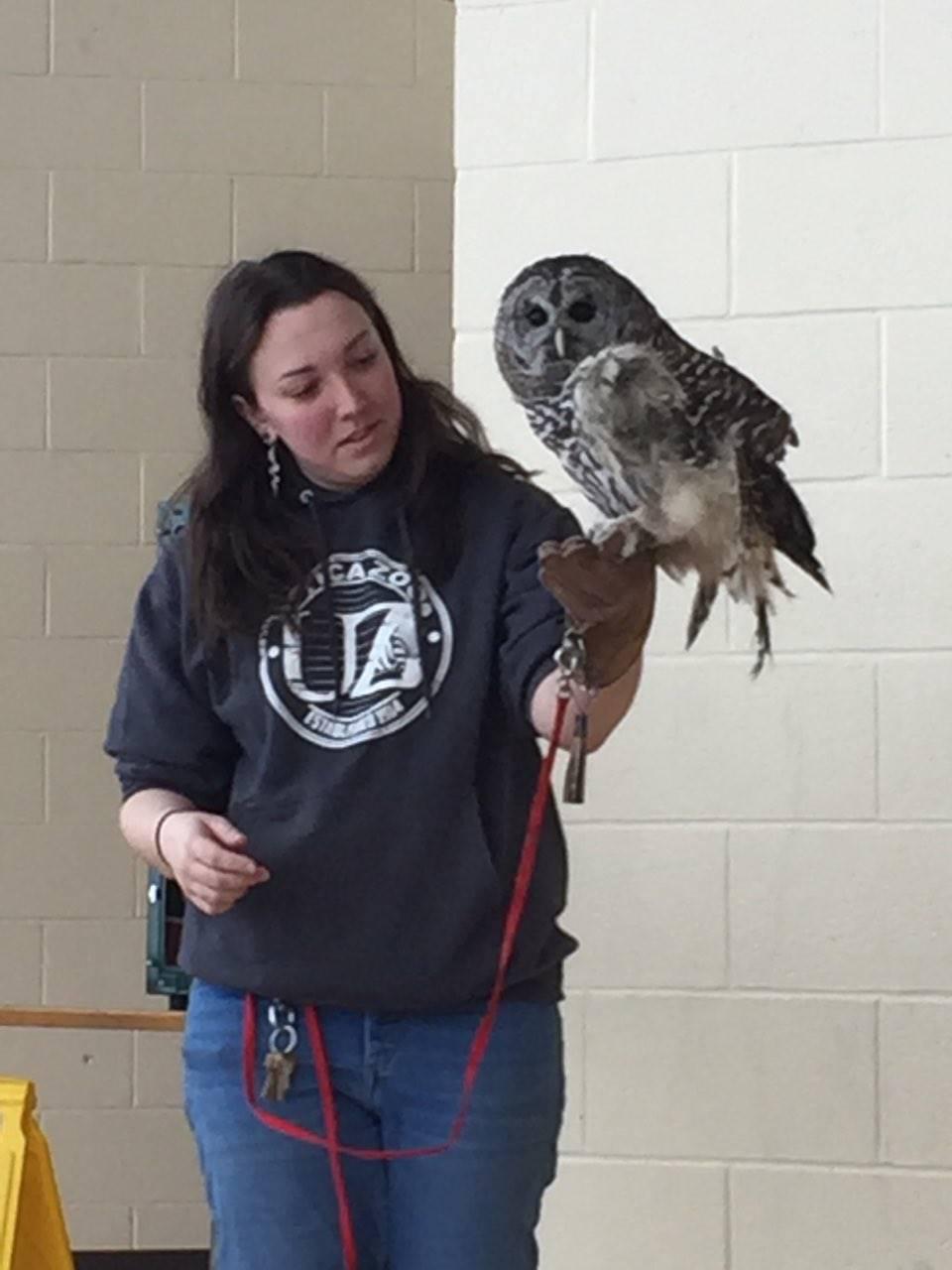 Utica Zoo mobile - owl